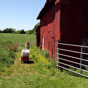 Beautiful day for chores. New bedding for #cloverthepig #bigredbarn #farmchores…