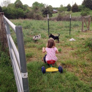 Rain rain go away, all the critters (and kids) want…
