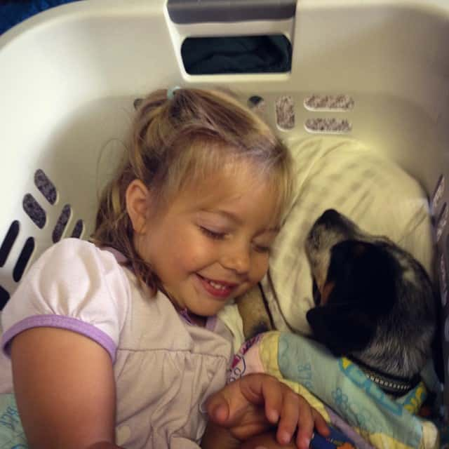 The toddler and puppy resting in the laundry basket was adorable...until I realized that is MY pillow they are laying on! #toddlermischief #conway #emilylillian