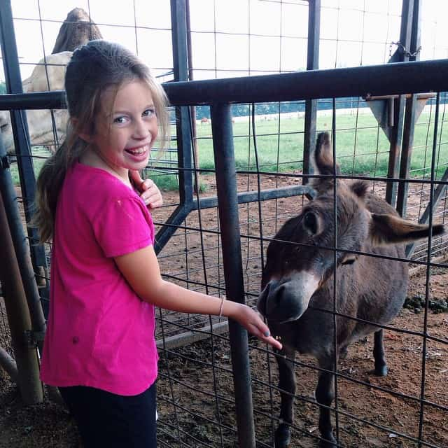 #lazy5ranch #minidonkey #iwantone
