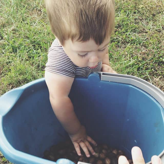 The big kids are helping Great Grandma pick up pecans while #jonjon does his best to dump the bucket #littlebrotherproblems #gg #farmlife
