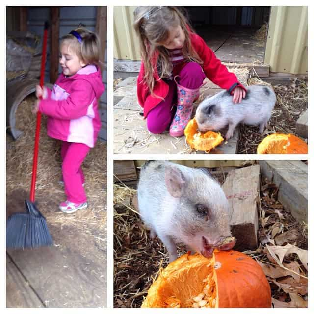 It makes my heart happy to see them happy. So thankful for family who made keeping Clover possible. I had no idea what joy she would bring...how she would soothe our wounds and allow us to keep a piece of our #farmlife dreams. #cloverthepig