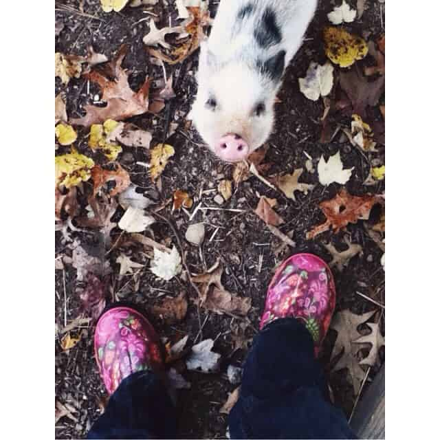 Raising a future instagramer... Found this #fromwhereistand photo on #miriamalayna iPod. She loves her #cloverthepig