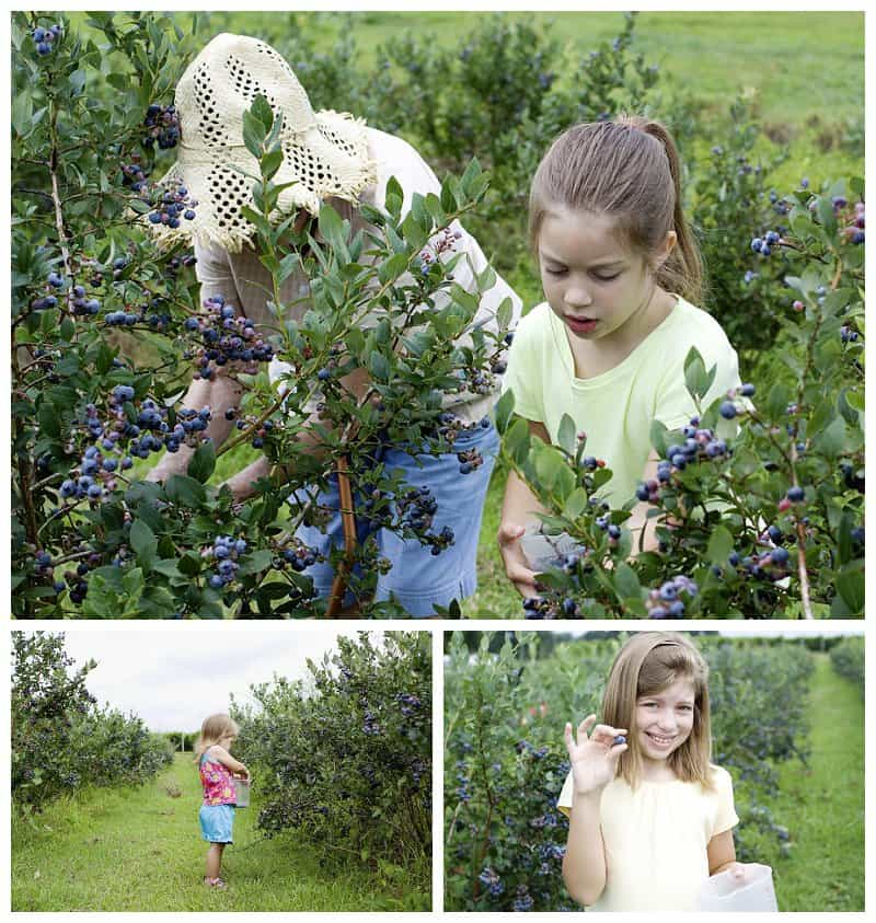 Blueberry picking with G.G.