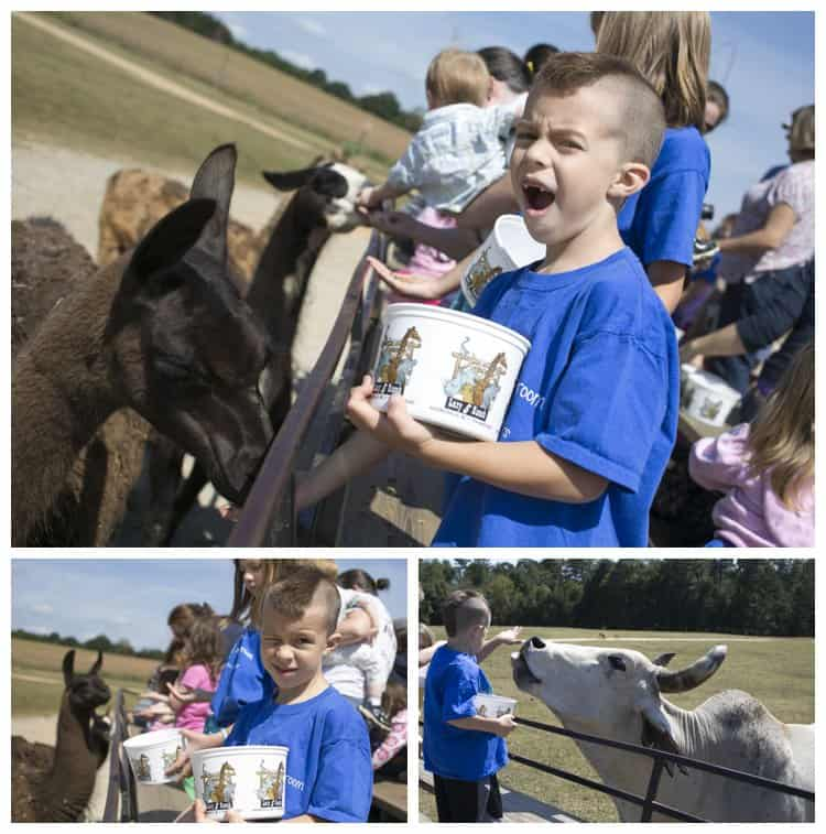 Feeding animals at Lazy 5 Ranch