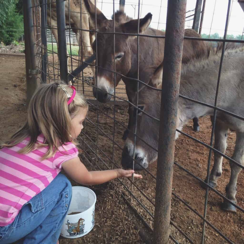 Emmy and mini donkey