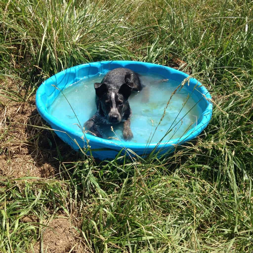 What? This is supposed to be Clover the pig's swimming pool??