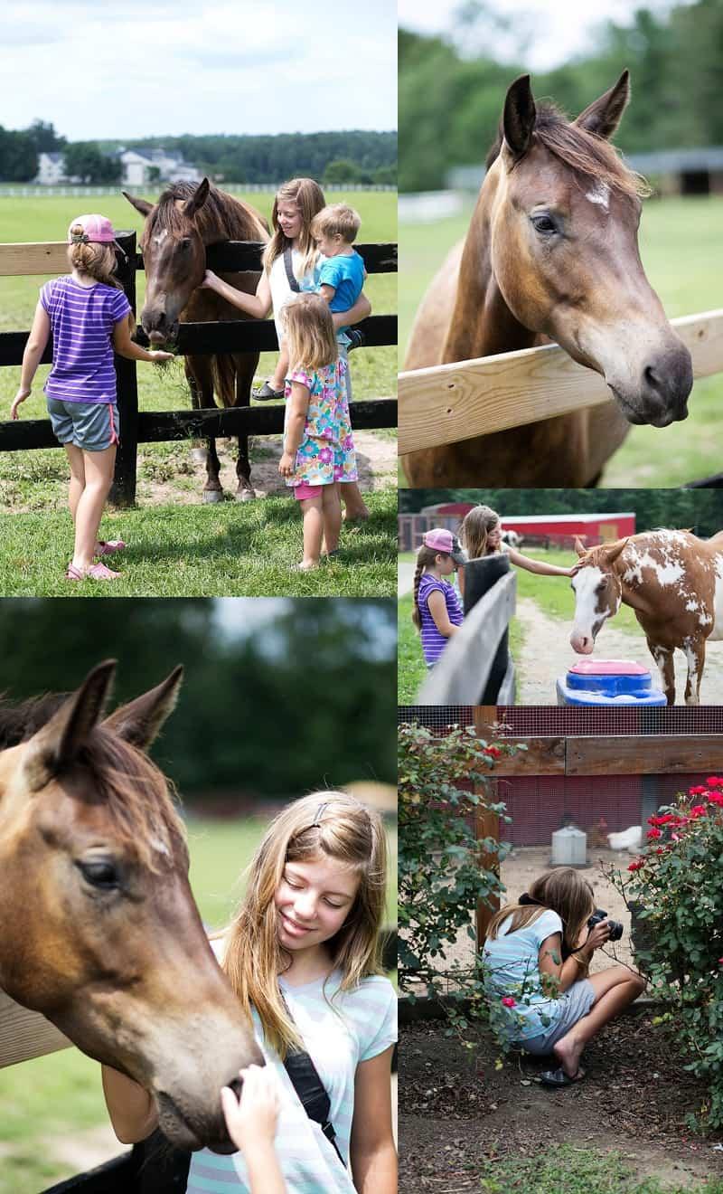 Horses in Charlottesville