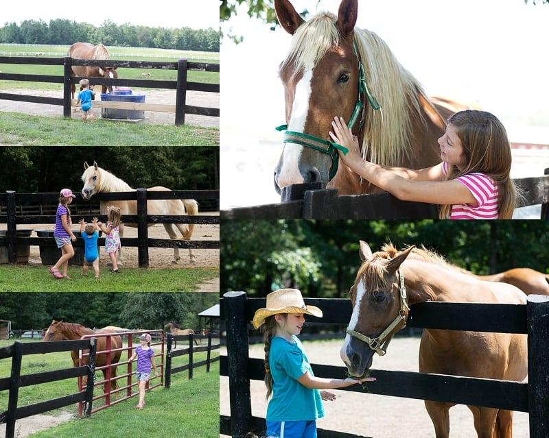 Farm time at Charlottesville