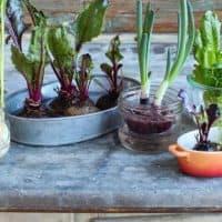 How to Regrow Vegetable Scraps